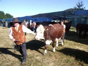 L'occasion de découvrir ou redécouvrir les modes d'élevages et les races bovines